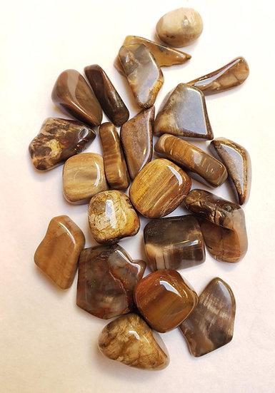 Petrified Wood Tumbled
