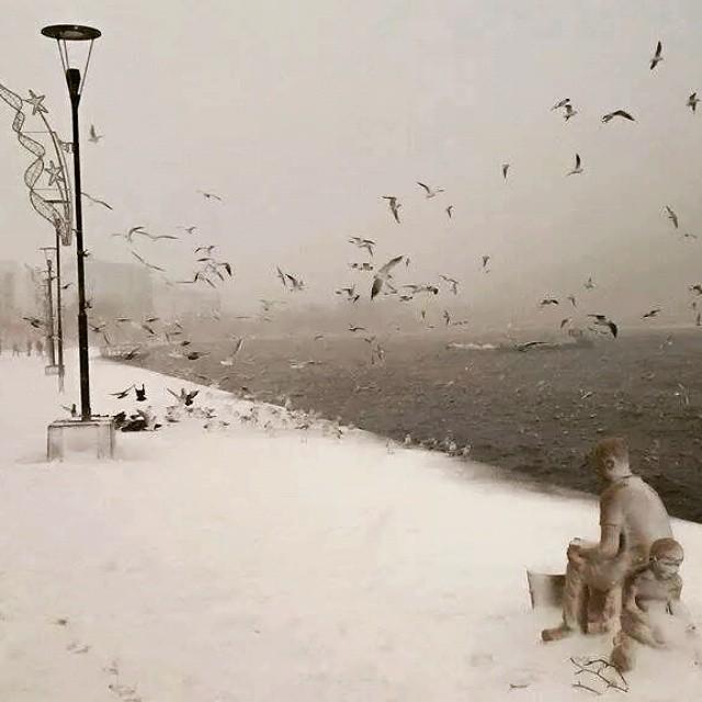 Instagram - #Çanakkale #ÇanakkaleBoğazı #Kordon #Kar #Kış #Martı #Happynewyear #