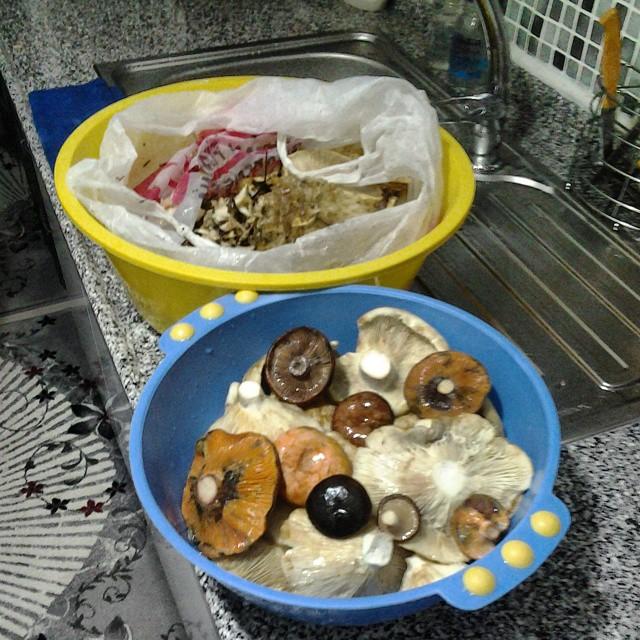Instagram - #Mantar #Mushroom #Melki #Sütlüce #Kulacık #Çanakkale Bayram ziyaret