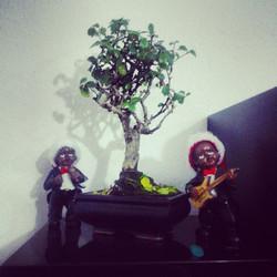 Instagram - Minik ağacımızın altında seranat var :) #Bonsai #KaraAğaç #BlackTree