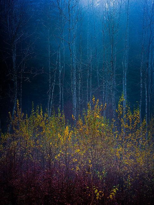 Hauntingly Autumn