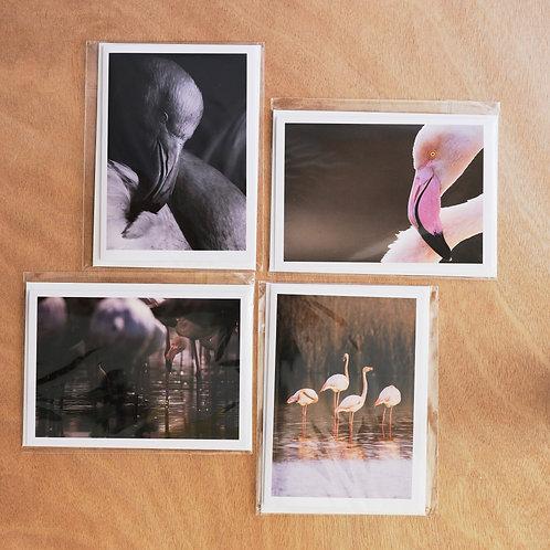 Flamingo - 4 greeting cards