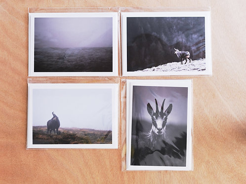 Chamois - 4 greeting cards
