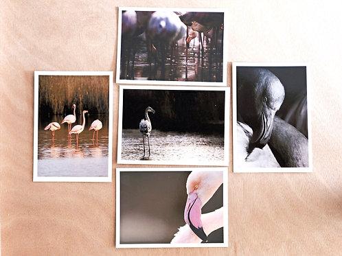 Flamingo - 5 cards