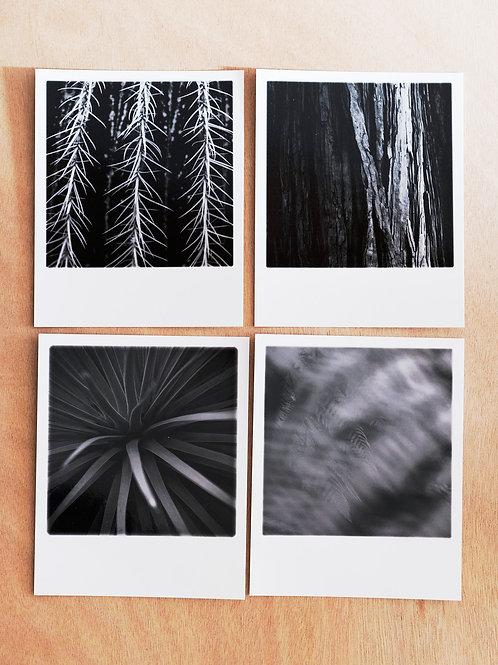 Botanical - 4 cards