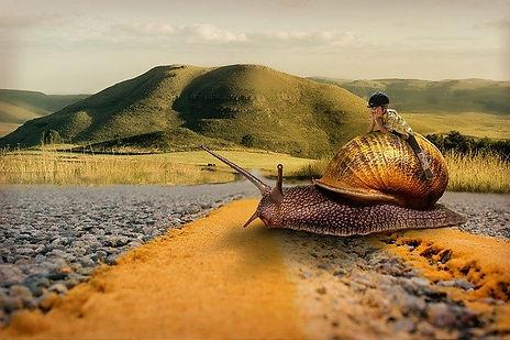 snail-3130177_640.jpg