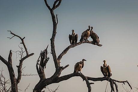 vultures-1081751_640.jpg