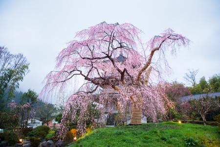 五ヶ瀬町 浄泉寺