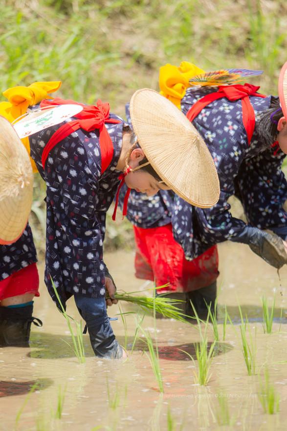 美郷町御田祭
