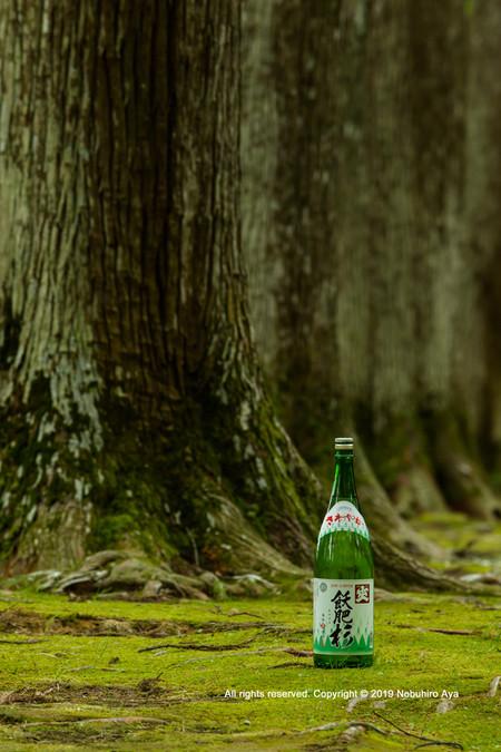 日南市 飫肥杉