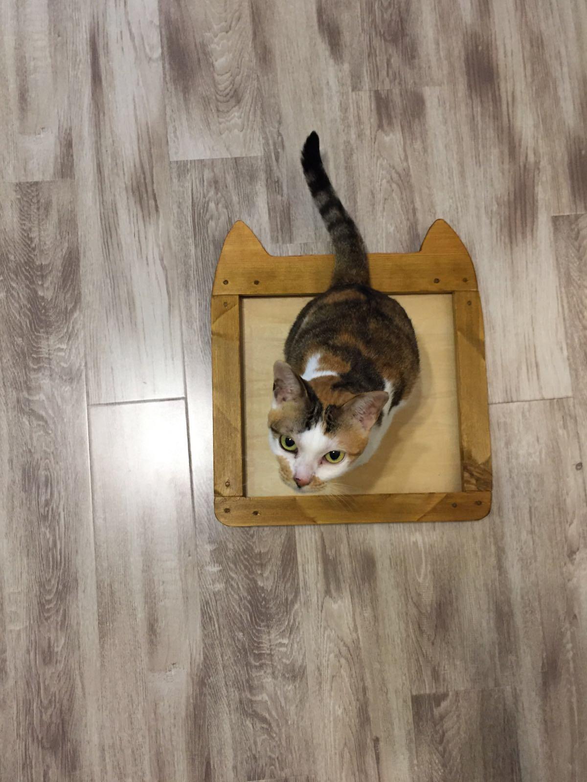 給貓貓的相架