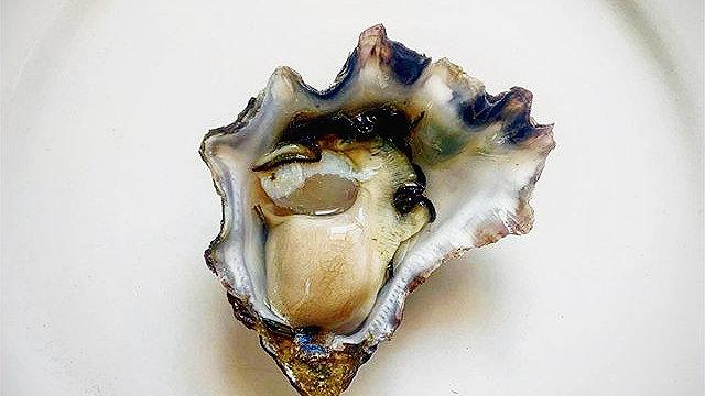 Lil Ripper - Small Rock Oysters