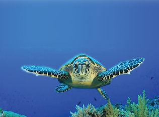 Mr Turtle expanded.jpg