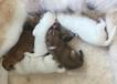 Sachi moeder geworden van nest SHICHI