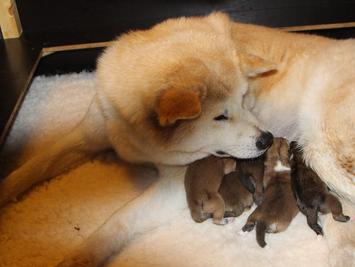 De pups van nest SAN zijn geboren!