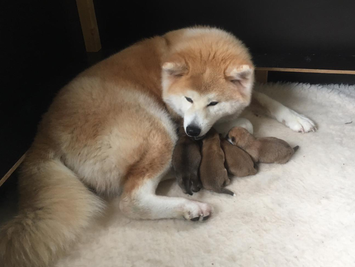 Yes, de puppy's van nest ROKU zijn geboren