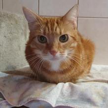 Léopold, 3 ans.