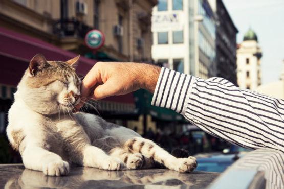 Mieux vivre ensemble avec les chats des rues