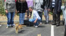 Que deviennent les chats capturés du Bel Air?