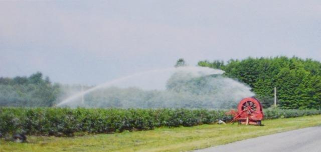 Передвижные большие пушки встречаются на старых плантациях голубики. Эта система полива позволяет вносить большое количество воды на большие участки и была дешевой в установке. Теперь редко устанавливаются такие системы.