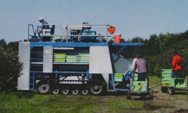 Большие самоходные сборщики голубики распространены на больших фермах. Этот сборщик имеет гусеничных ход для использования его на почве с высоким содержанием органики и высоким уровнем воды. Эти поля влажные на протяжении сбора урожая.