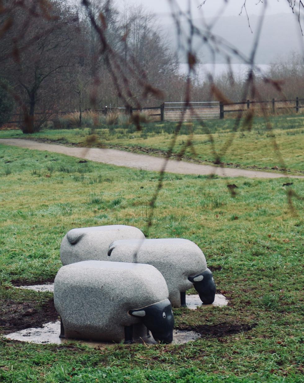 Sheep Seats