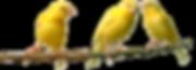 trois canaris.png