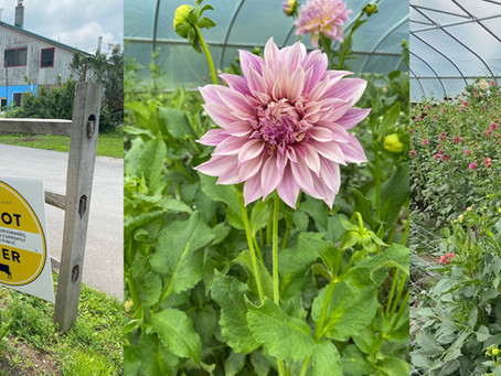 My Obsession with Biodynamic Farming Continues