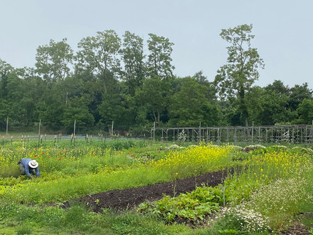 Crops from Biodynamic Farms Will Blow Your Mind!
