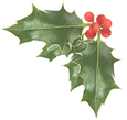 holly semi opaque.png