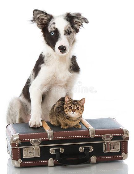 cat-dog-suitcase-isolated-white-72904151