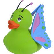 Canard Papillon