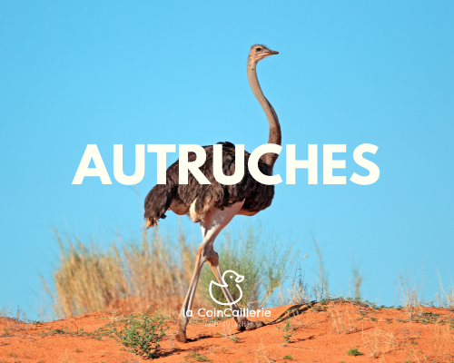 Autruches