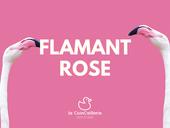 Flamingo (1) .png