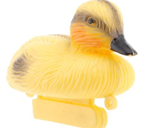 Canard d'étang