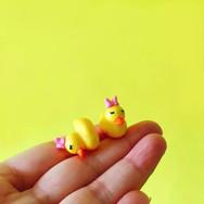 Mini Canard Fille et Garçon Terrarium