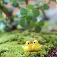 Mini Canard Terrarium