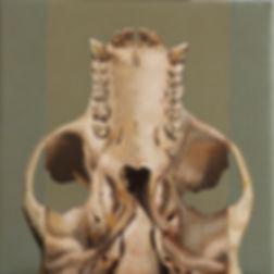 Primate series XIV, 36x36cm, oil on canvas, 2018