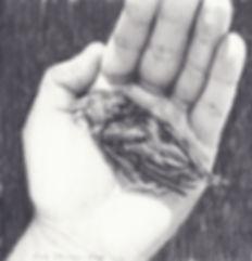 2015, Dead Bird, 21,5 x 21,5 cm, pencil on paper
