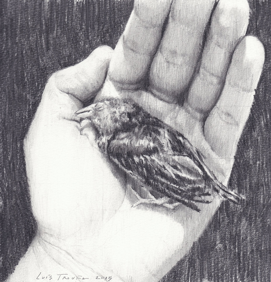 2015, Dead Bird, 21,5 x 21,5 cm, pencil on paper