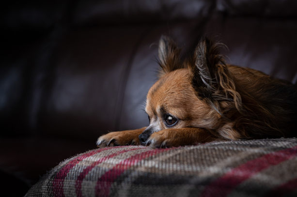 Pet Photography, we photograph all pets not just dogs