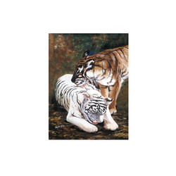 Peaceful Tigers