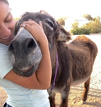 Hugging Donkey