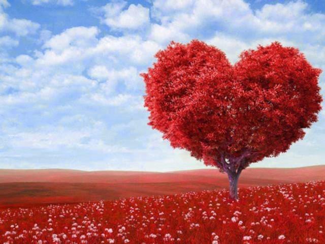 arvore coração
