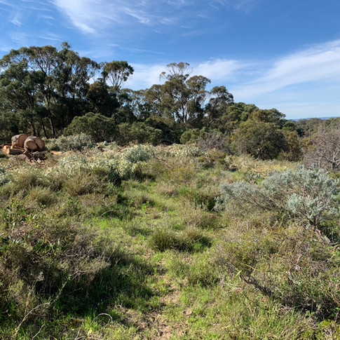 KING OF THE HILL- KARNUP