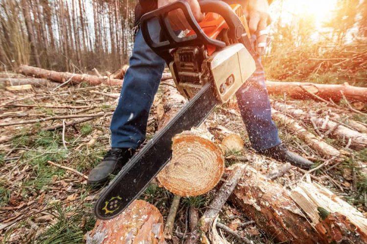 Orman İşçisi