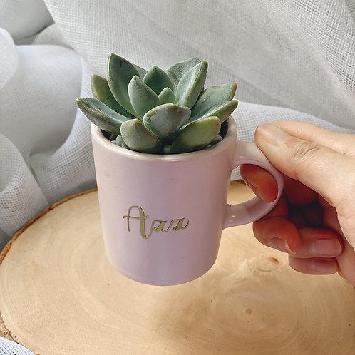 Mini Succulent Cup