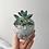 Thumbnail: Marble Succulent Pot