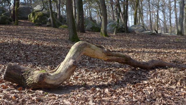 Floresta Fontainebleau2