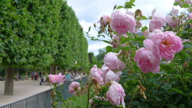 Jardin des Plantes_Jardin des Roses 1